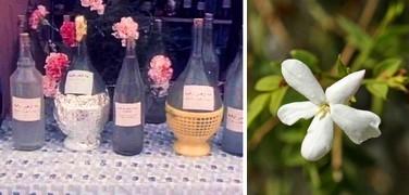 Blütenwässer / Hydrolate in Tunesien: Methode der Destillation und Tugenden